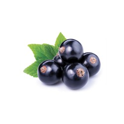 Black Currant Concentrate -...